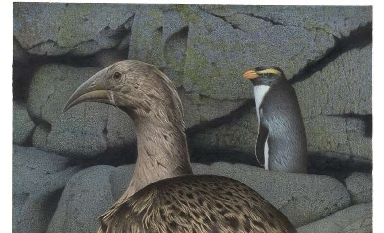 Origins of giant extinct New Zealand bird traced to Africa
