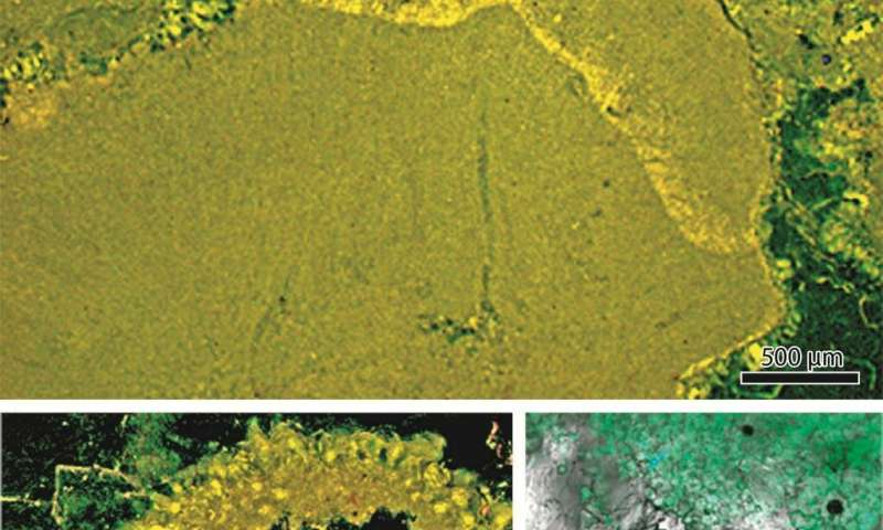 Palaeontologists demonstrate that coralline red algae have existed for 300 million years longer than previously presumed