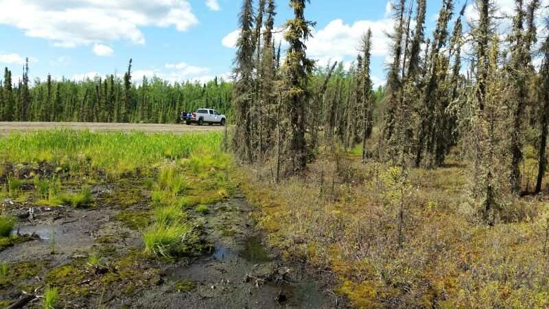Peatlands release more methane when disturbed by roads