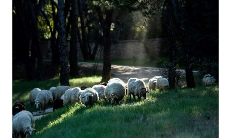 "People can ""sponsor"" one of the sheep by paying 30-90 euros ($34-$100) a year to help support the project"