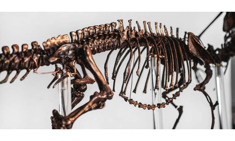 Perfectly preserved dinosaur skin found in Korea