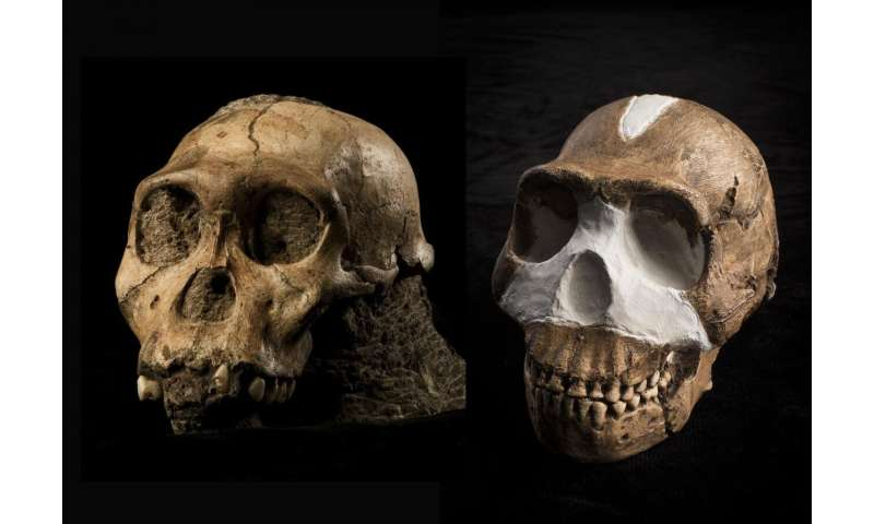 Perot museum unveils exhibition details for origins: Fossils from the cradle of humankind