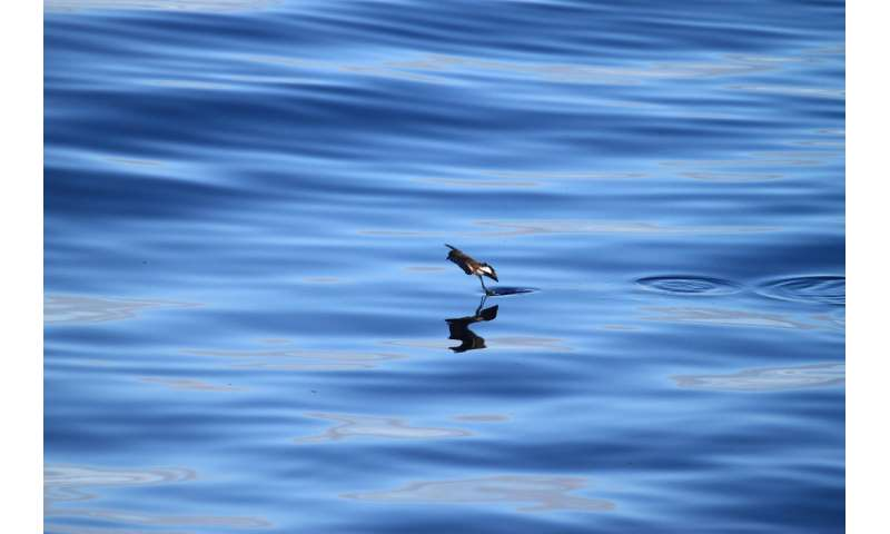 Removing invasive mice from the Farallon Islands would benefit threatened birds