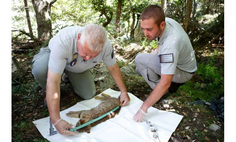 Pierre Benedetti (L) and Carlu-Antone Cecchini (R), of the National Hunting and Wildlife Office (ONCFS), have been researching t