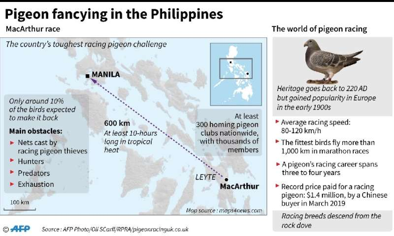 Pigeon fancying in the Philippines