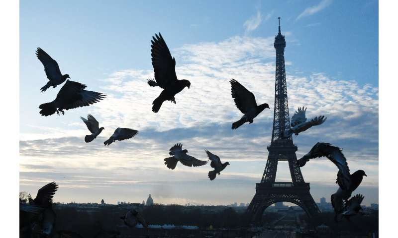 Pigeons are often viewed as vermin but could play a role in understanding urban wildlife