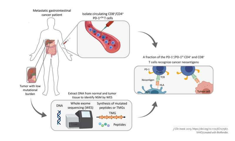 Pioneering cell therapies for non-responders to current immunotherapies
