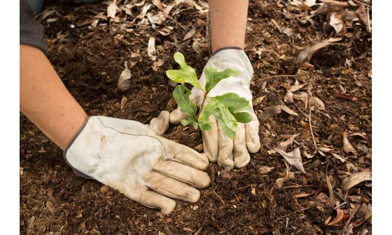 Planting trees is no substitute for natural forests