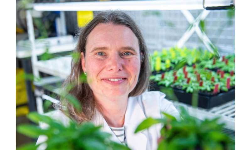 Plant nutrient detector breakthrough