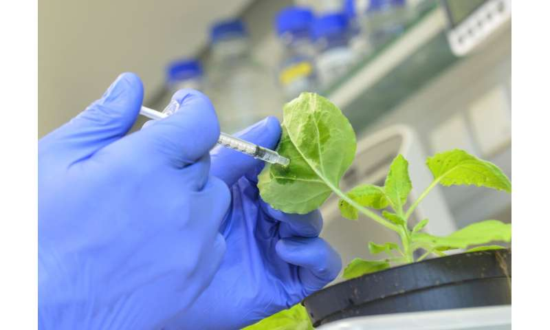 Plant protection: Researchers develop new modular vaccination kit