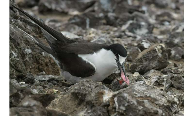 Poor diet may have caused nosedive in major Atlantic seabird nesting colony