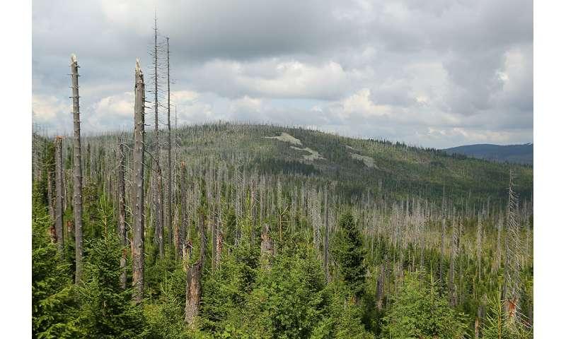 Preventing Future Forest Diebacks