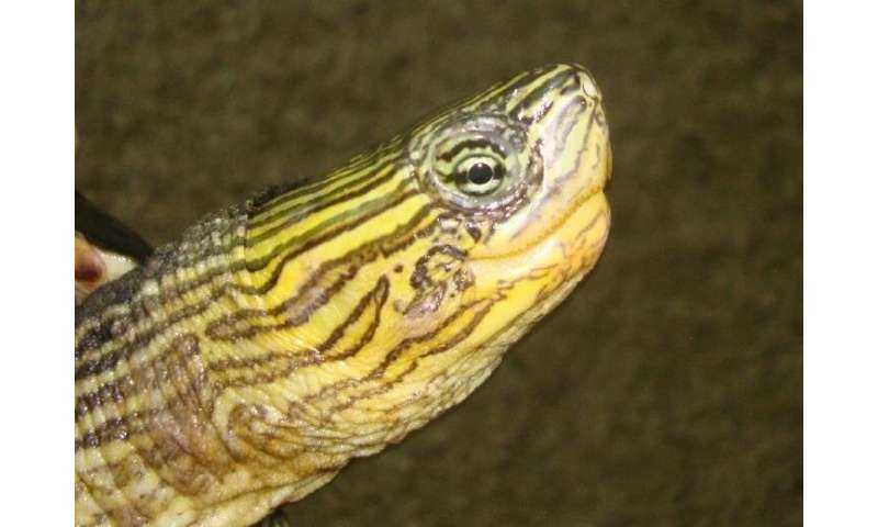 Preventing people from abandoning exotic pets that threatened biodiversity