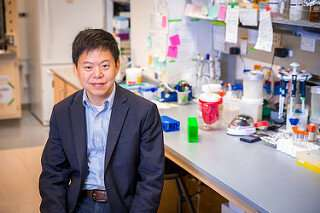 Programming white blood cells to fight pancreatic cancer