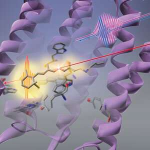 Protein changes precede photoisomerization of retinal chromophore