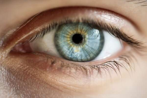 Protein-transport discovery may help define new strategies for treating eye disease