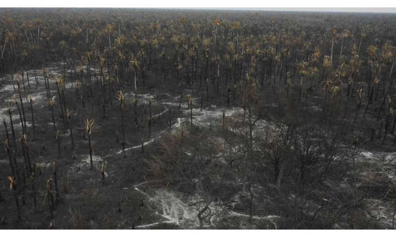 """""""The forest is totally charred and the damage is irreversible. It will never get back to normal,"""" said Sandra Quiroga"""