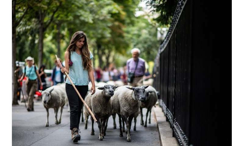 """""""The most important thing is to show that it's possible to have sheep in the city,""""said Julie-Lou Dubreuilh, co-found"""