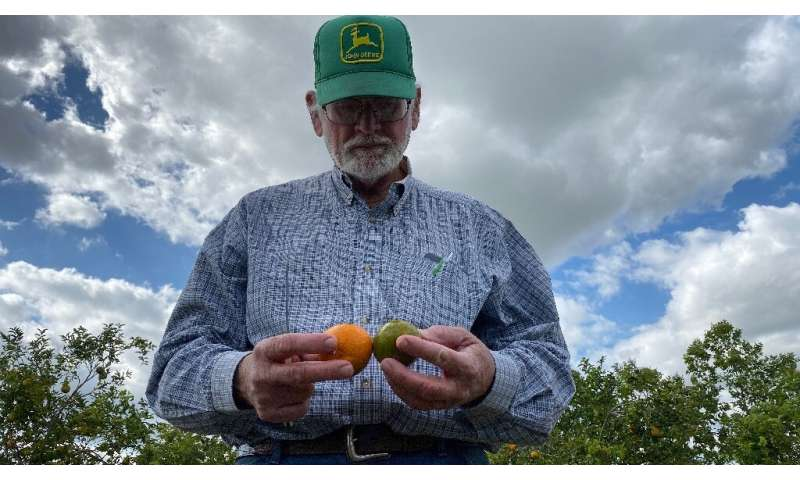 """We've lost a great deal of our productive capacity,"" said Peter Spyke, a third-generation citrus farmer"