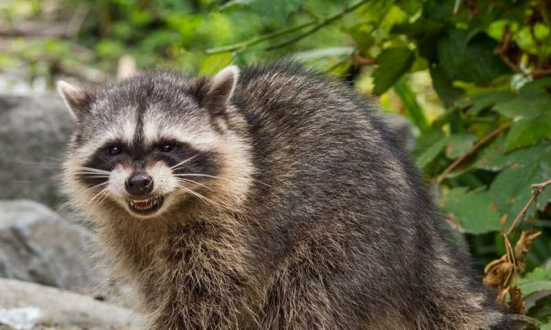 Rabies: How it spreads and how to protect yourself