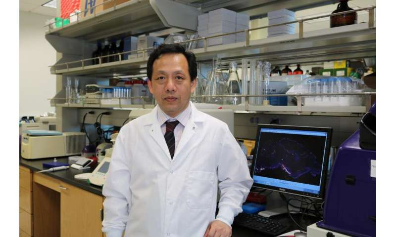 Raising eyebrows on neuroinflammation: Study finds novel role for 'skin plumping' molecule