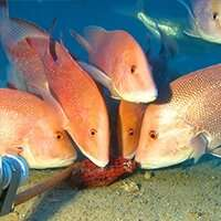 Rare pictures uncover diverse marine life at Ningaloo Reef