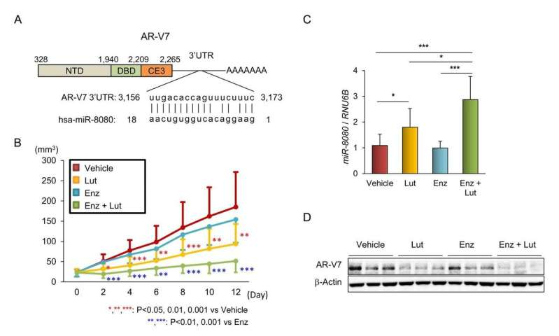 Recruitment of miR-8080 by luteolin inhibits AR-V7 in castration-resistant prostate cancer