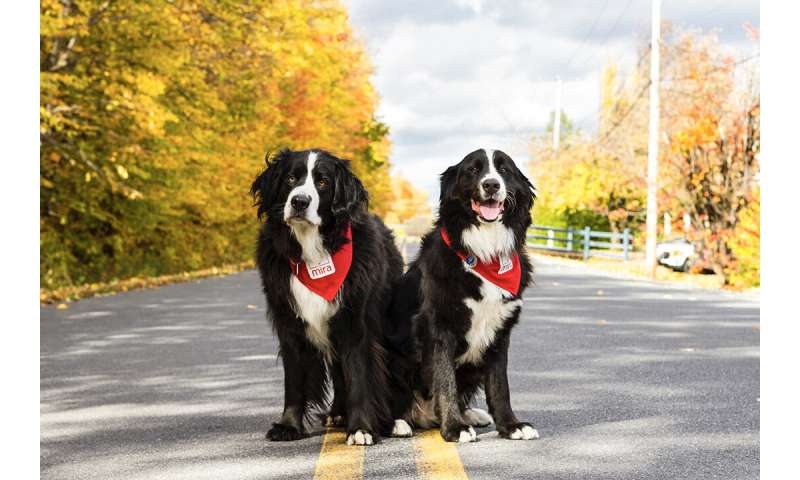 Rehab dogs help children with cerebral palsy walk