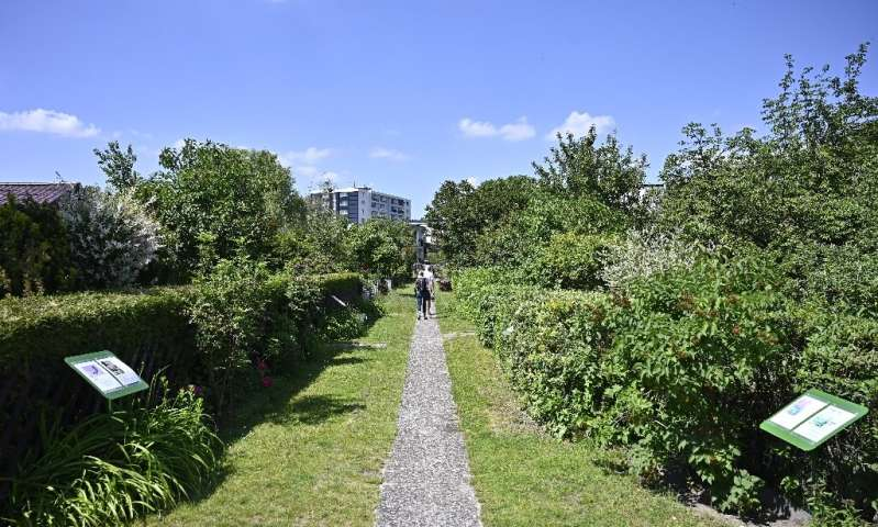 Rent hikes and demand for housing in Berlin have put its allotments into the sights of developers looking for real estate