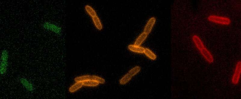 Research advances search for new antibiotics