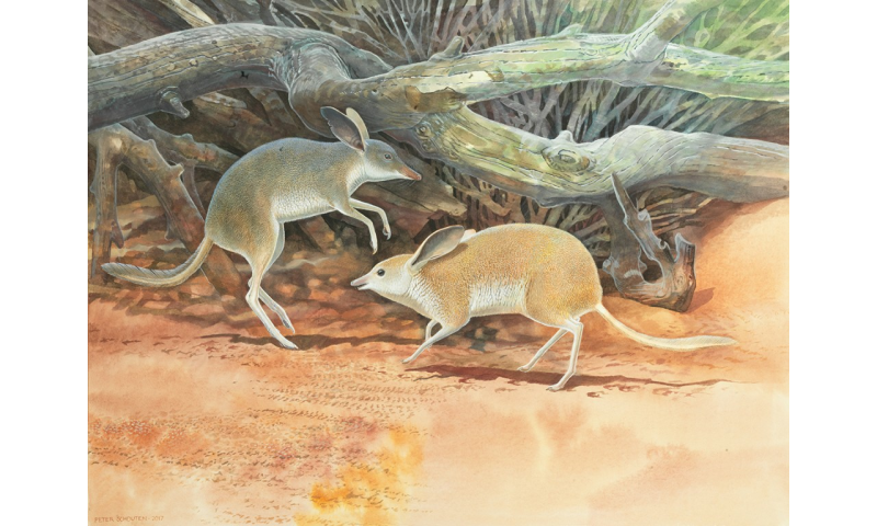 Researchers discover new species of extinct Australian mammal