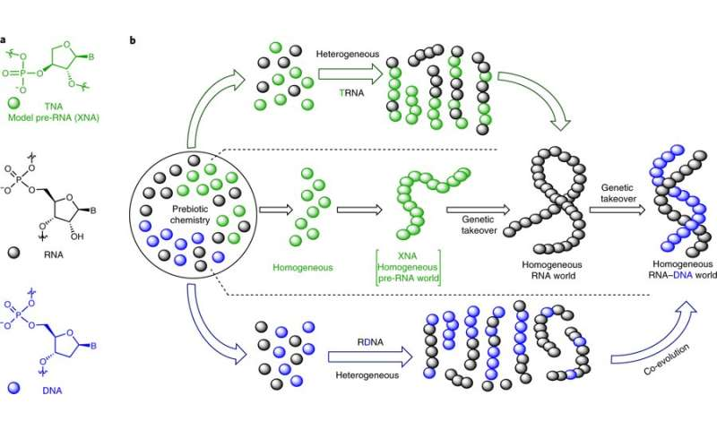 Research pair suggest RNA and DNA got their start from RNA-DNA chimeras