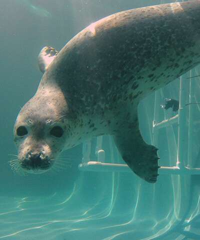 Review of noise impacts on marine mammals yields new policy recommendations