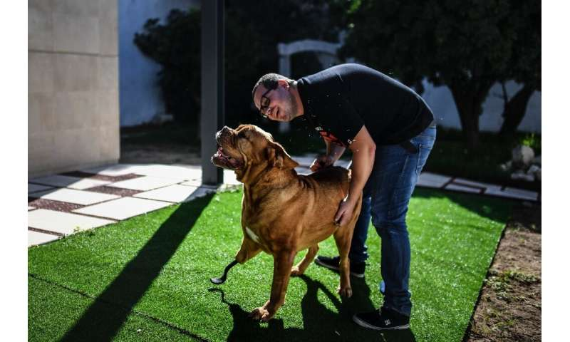 Ronda had already been treated as a puppy by veterinarian Henrique Armes, a pioneer in the field of pet prostheses