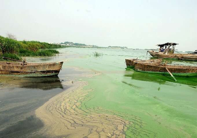 Runoff water containing nitrates and phosphates cause algae blooms, which can have a huge negative impact on ecosystems