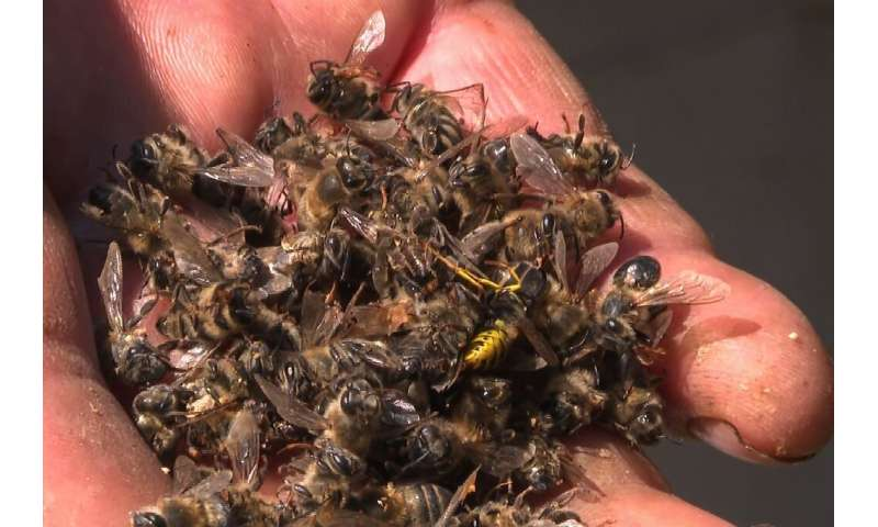 Russian beekeepers south of Moscow have been seeing their bees die off en masse due to what they believe is improper sraying of