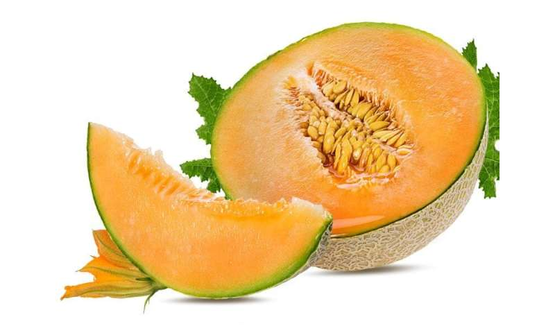 Salmonella outbreak tied to pre-cut melons expands to more than 100 cases