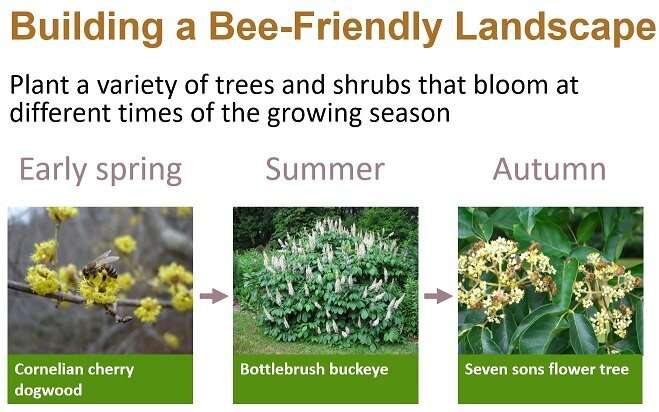 Science-based guidelines for building a bee-friendly landscape