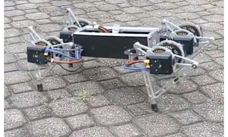 Scurrying roaches help researchers steady staggering robots