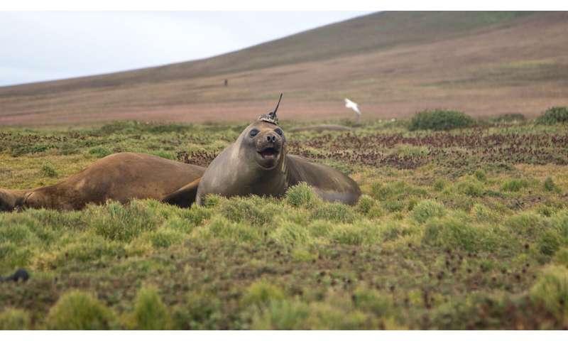Seal takes ocean heat transport data to new depths