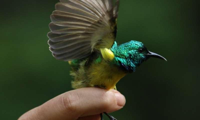 Secrets of Chimanimani revealed in biodiversity surveys