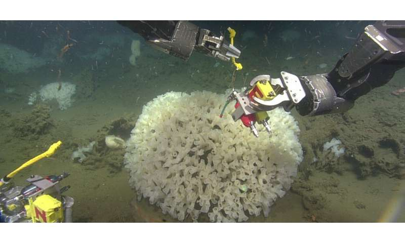 Sediment from fishing choking out sea sponges, study shows