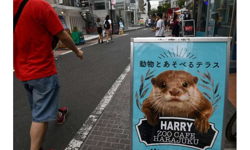 Several 'otter cafes' have popped up in Japan