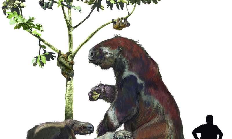 Shaking up the sloth family tree