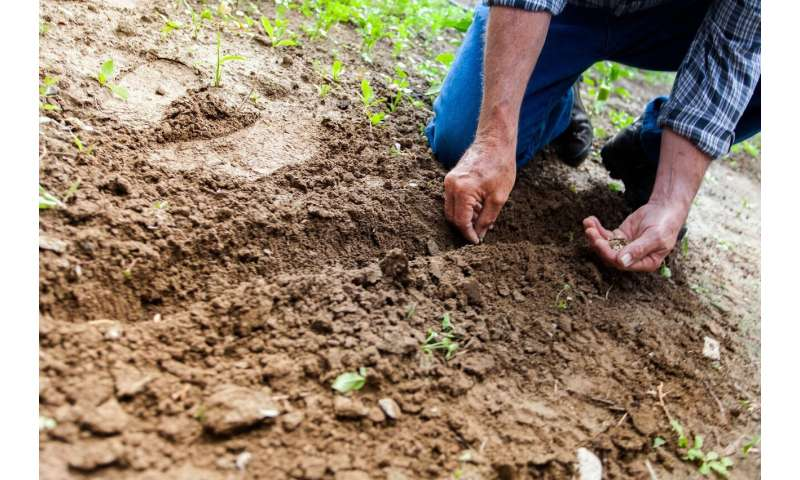 Sharing seeds could help farmers grow better food