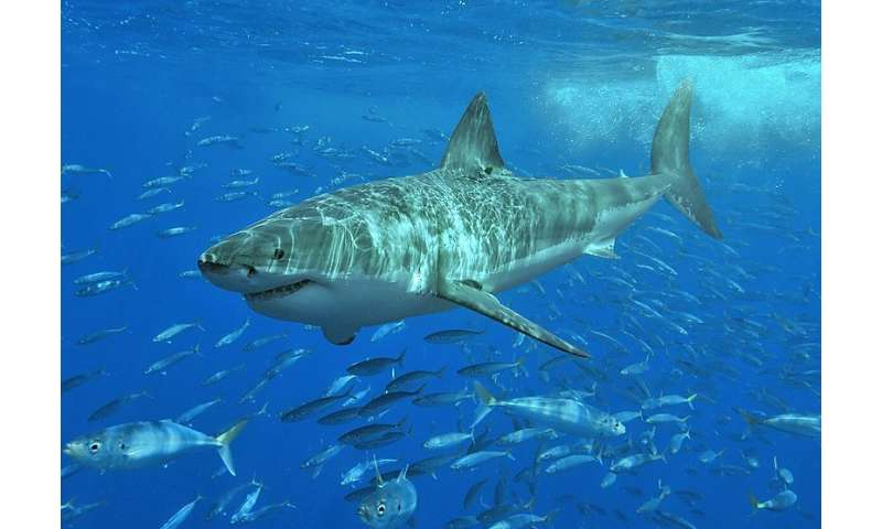 Sharks choose who they hang with, researchers reveal
