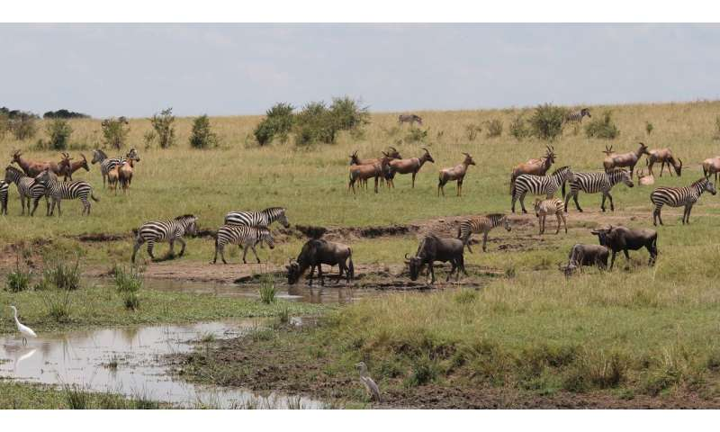 Shrewd savannah species choose friends with benefits on the African plains