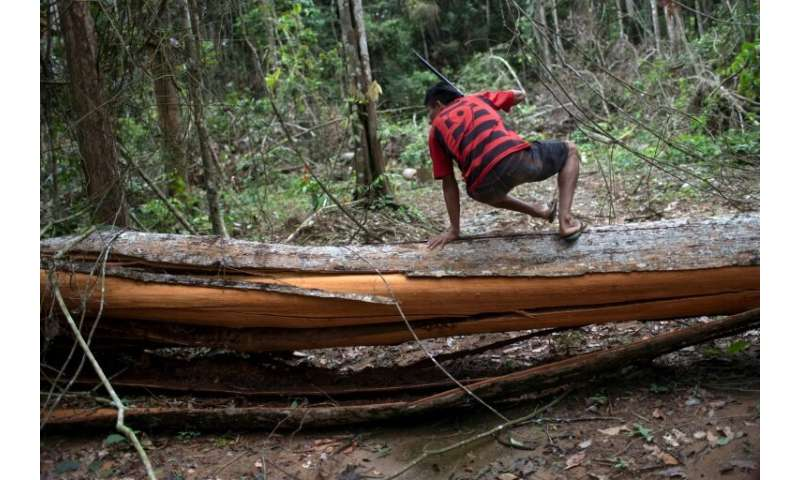 Since 1988, indigenous land rights have been recognized in Brazil's constitution, which forbids any activity like timber extract