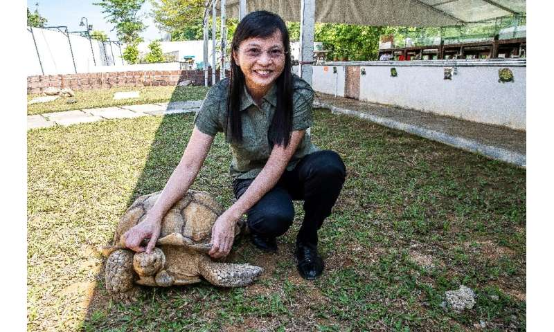 Singapore's Live Turtle and Tortoise Museum owner Connie Tan battled hard to keep the sanctuary going after the original locatio