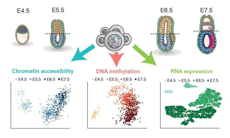 Single-cell analysis of the earliest cell fate decisions in development